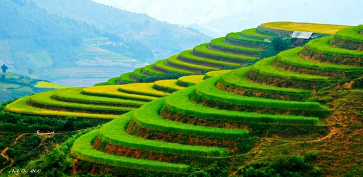 Rice terraces Vietnam road trip by car from Hanoi to Ho Chi Minh